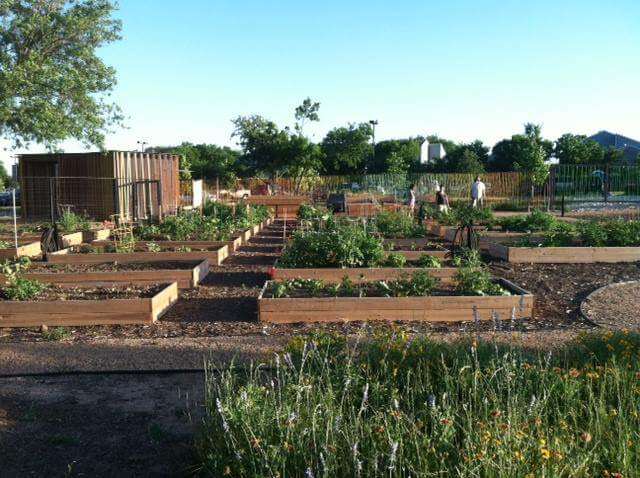 4-North-Austin-Community-Garden
